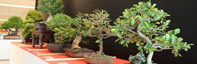 Exposição: A Arte do Bonsai