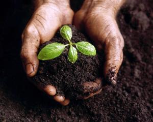 Maringá X Agroecologia
