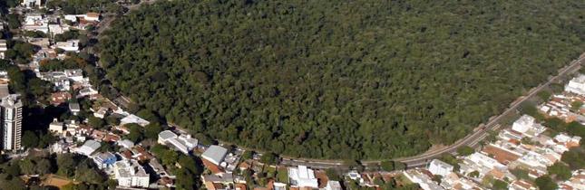 Bosque II - Parque Florestal Dos Pioneiros